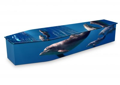 PACIFIC-DOLPHINS