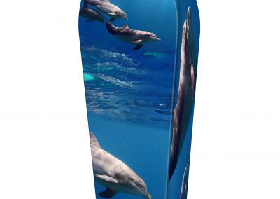PACIFIC-DOLPHINS-(LID-VIEW)